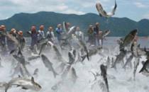 【VR视频】四季大通千岛湖生态渔业宣传大片