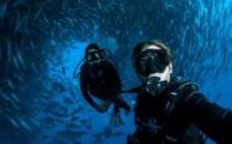 【好多鱼】潜水员与超大鱼群亲密接触