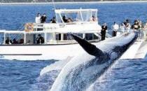 【高清VR】黄金海岸观鲸之旅